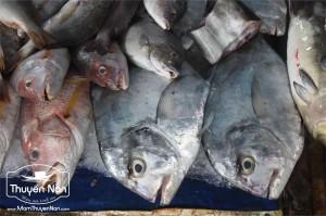 Cá để làm nước mắm được chọn lưa rất kỹ lưỡng.