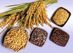 Bắp gạo rang làm phụ gia trong chế biến nước mắm.